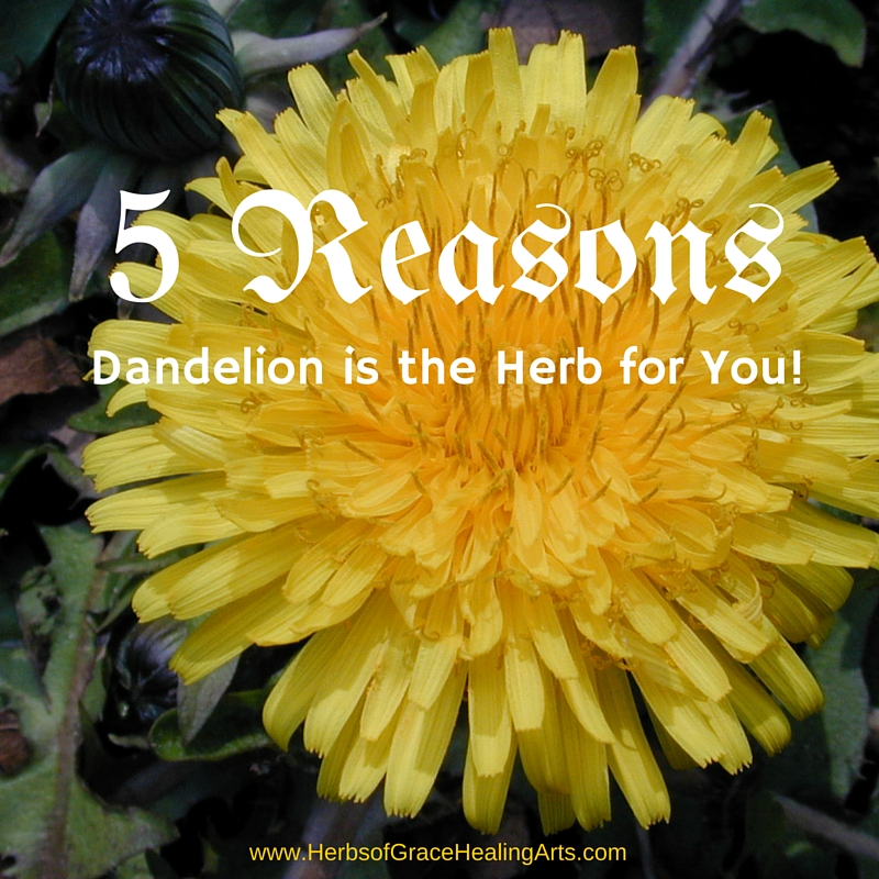 5 Reasons Dandelion Is The Herb For You!