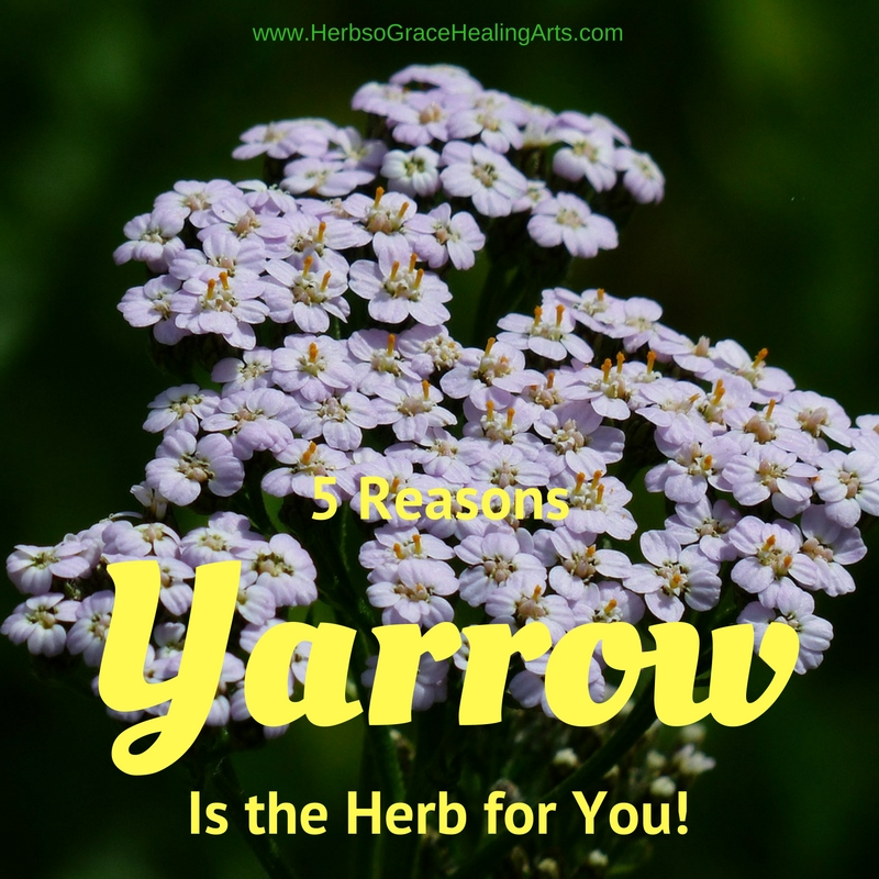 5 Reasons Yarrow Is The Herb For You