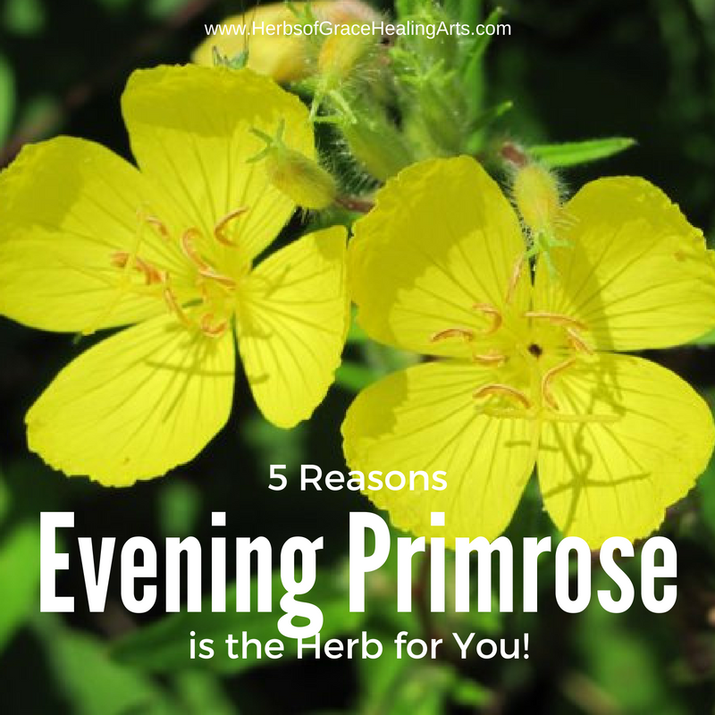 5 Reasons Why Evening Primrose Is The Herb For You