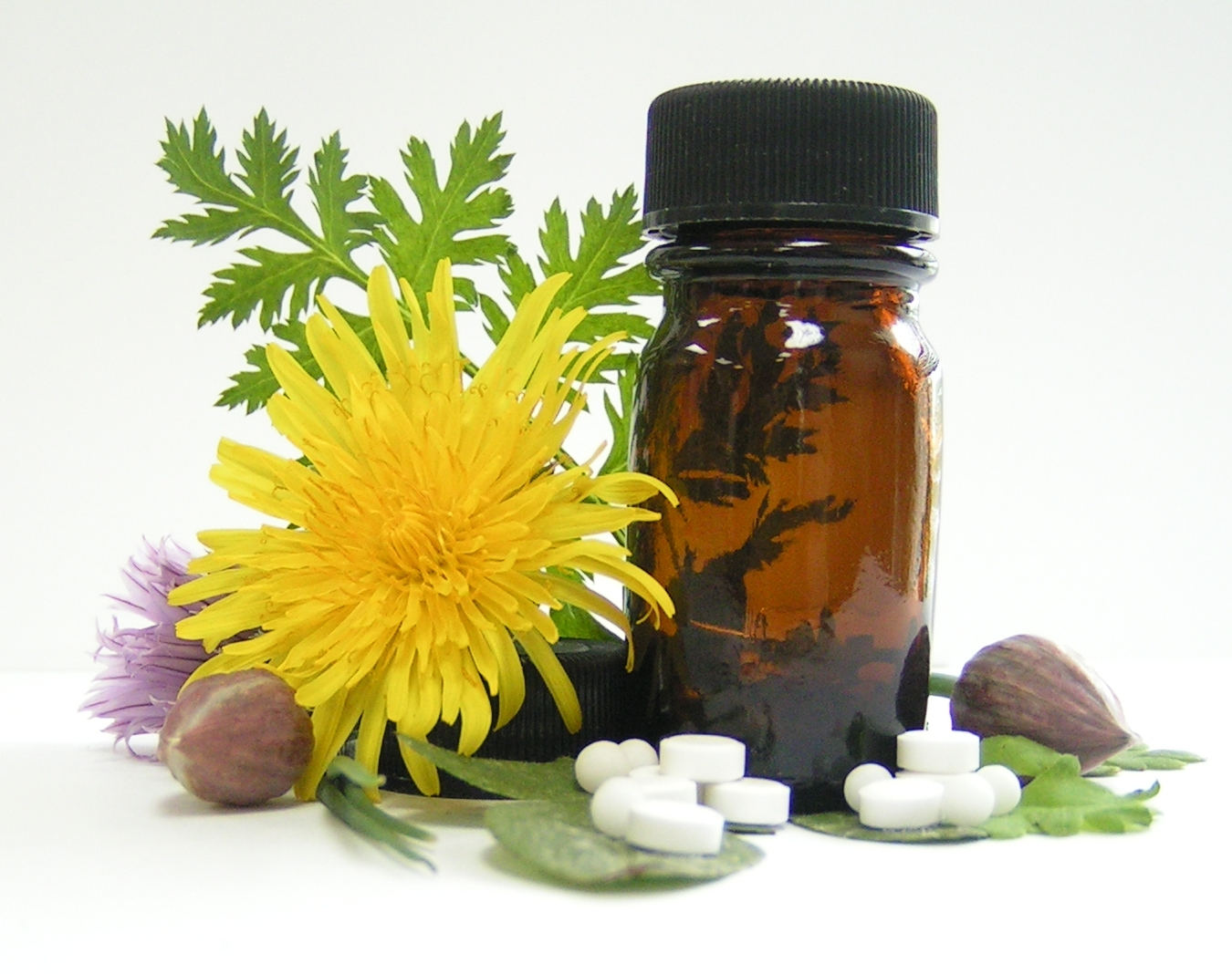 dandelion flower, garlic, echinacea flower, and natural tinture for colds and flu